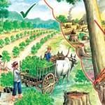 Novo-Código-Florestal-Brasileiro-resumo