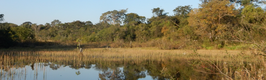 Fisionomia do Cerrado no setor oeste da Reserva Particular do Patrimônio Natural Porto do Ifé, Município de Colômbia-SP. Fotografia: Luiz Octávio Câmara de Mello Coimbra